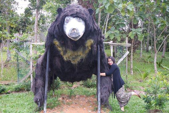 Wisata Santai Melihat Beruang Madu Ulasan Sun Bear