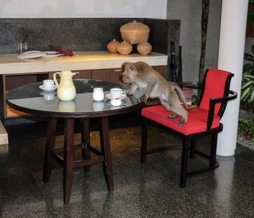 Royal Kamuela: Breakfast visitor