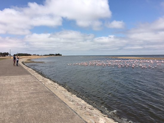 Sandwich Harbour 4x4: Flamingos feeding by siphoning water at the end of the Walvis Bay promenade - on the way to Sand