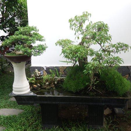 Ornamental pond with bonsai trees