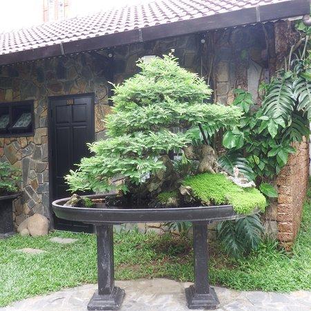 Ornamental pond with bonsai tree #2