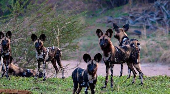 Experience Zanzibar Tours & Safaris