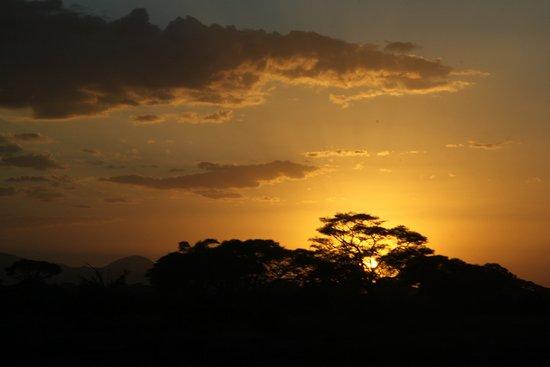 Some photos at Kibo Safari Camp and wildlife at Amboseli National Park