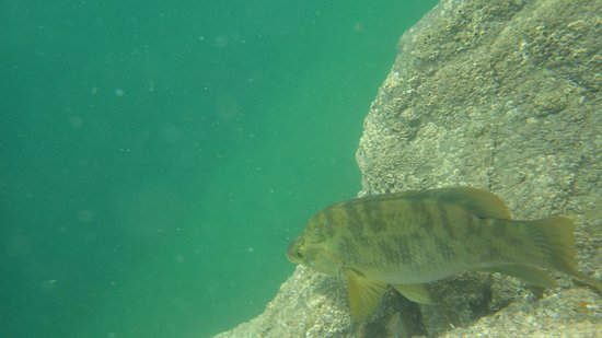St Austell, UK: Snorkel with the marine life