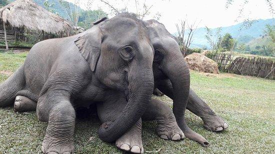 Elephant Steps Chiang Rai