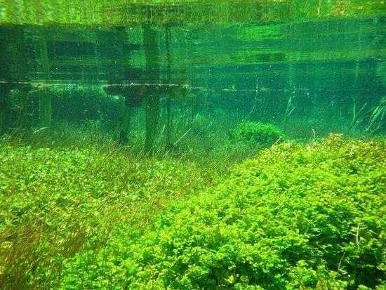 Ewens Pond