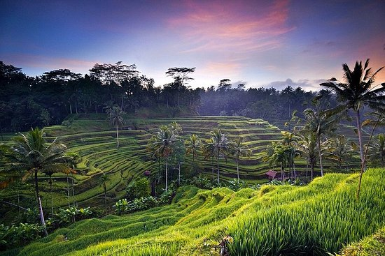 Guide and Excursions in Bali