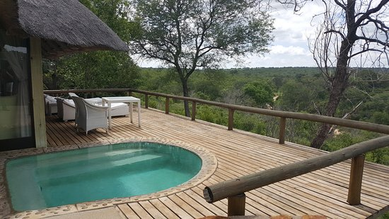 ‪‪Leopard Hills Private Game Reserve‬, جنوب أفريقيا: Relax in the pool after a game drive‬