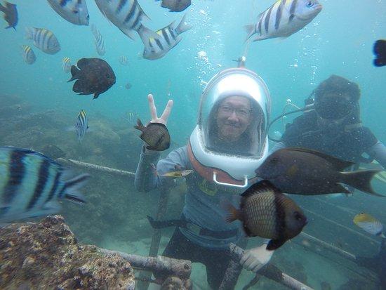 BMR Dive and Water Sports : 不少的熱帶魚會圍過來,但種類不算多; 每個人有一個潛水夫指導員陪伴,在水下還算安全