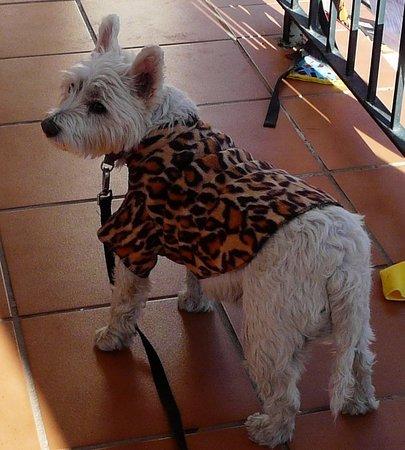 Pueblo Nuevo de Guadiaro, Spania: Hundekleidchen selbstgemacht am Samstagsmarkt vor der Restaurant
