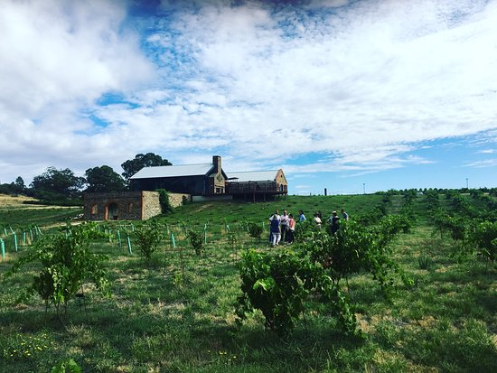 St Hugo Wines