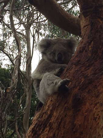 Cowes, Australia: Up close and personal
