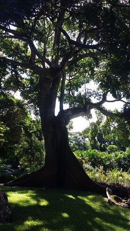 Picture of jardin botanique de deshaies deshaies tripa for Jardin botanique deshaies