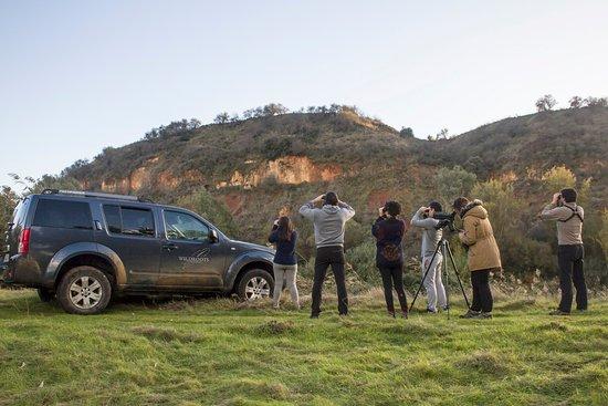 Montijo, Spain: Nuestros clientes disfrutan observando aves en los parajes naturales de Extremadura