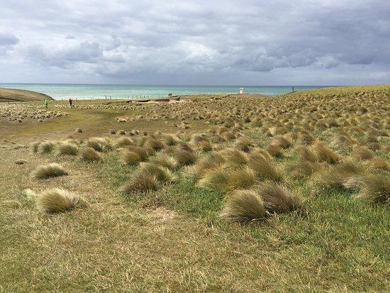 Waikawa, Nova Zelândia: prato da percorrere