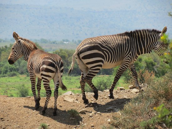 Mountain Zebra National Park Photo
