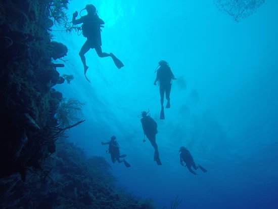 Providencia, Colombia: Divers up the wall