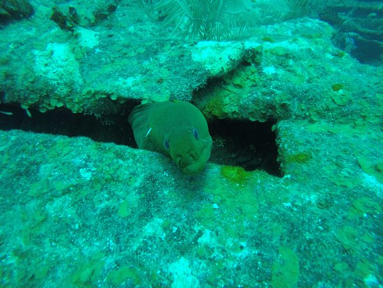 The Dive Shop Old Providence: Morena (green eel)