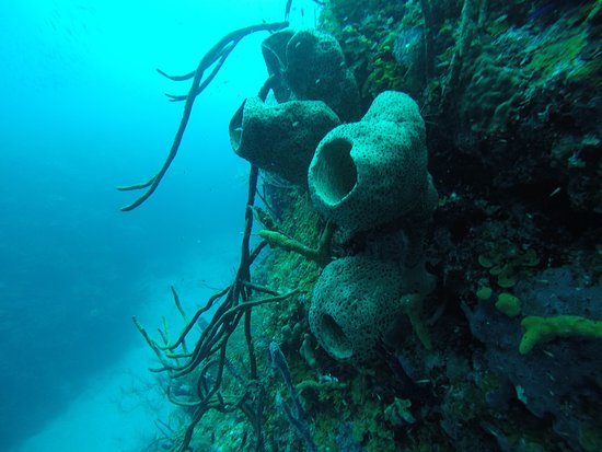 The Dive Shop Old Providence: Corals