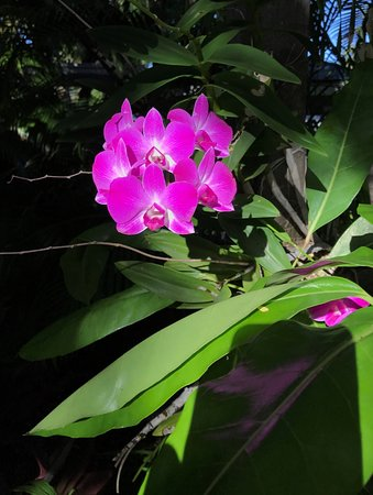 Key West Harbor Inn: Orchid on path to pool in morning sun!
