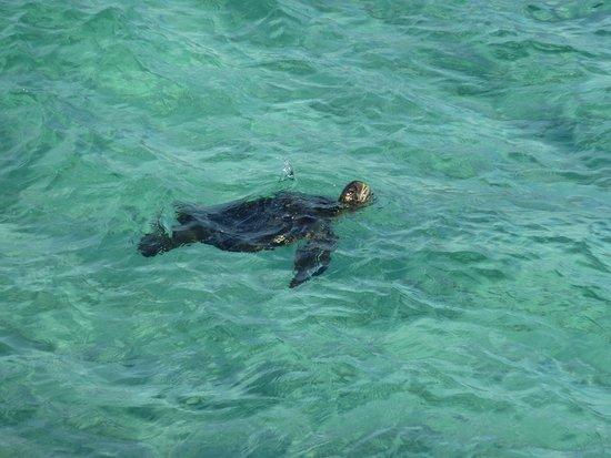 Floreana, Ecuador: Glasklares Wasser mit Schildkröten