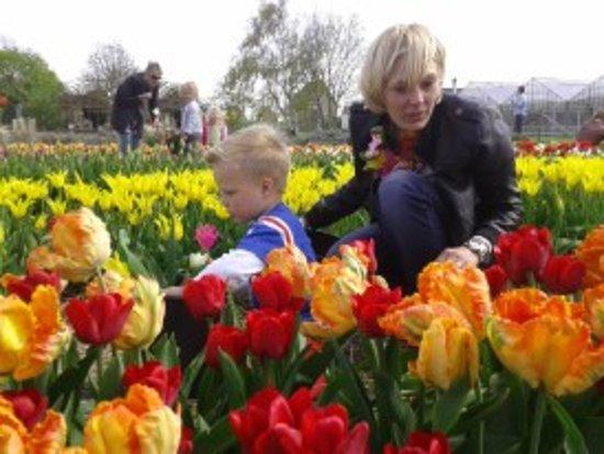 Zomerbloemen Pluktuin Anne-Marie Fontijn