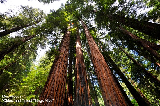 Muir Woods Shuttles and Tours