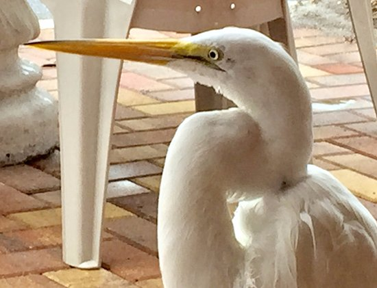 Gulf Beach Resort Motel: This bird seems to be a resident.