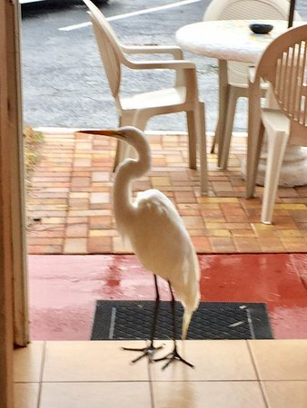 Gulf Beach Resort Motel: He came into the porch area for a visit.