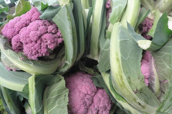 Bilting, UK: Purple cauliflowers, all home grown