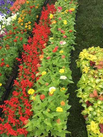 Ligonier, PA: flowers