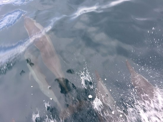 Fare Pea Iti: Les dauphins nous font l'escorte
