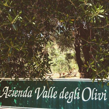 Ojai, CA: Pretty, pretty olive trees!