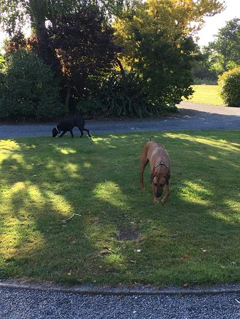 Marlborough Bed & Breakfast: Friendly pets of the family