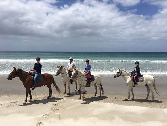 Wellsford, Nueva Zelanda: Fun at the beach with Diesel, Phantom, Moro and Ozzy!