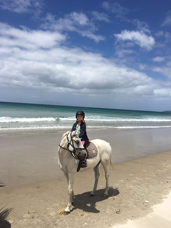 Pakiri Beach Horse Rides - Day Tours: Ozzy is posing!