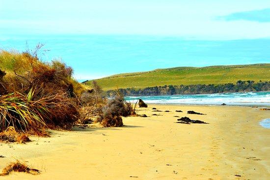 Owaka, Nueva Zelanda: Nearby Surat Bay to view Sea Lions