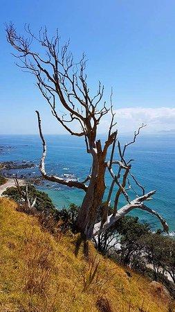 Mangawhai, Nueva Zelanda: Views