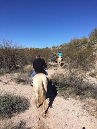 Arizona Horse Company: photo1.jpg