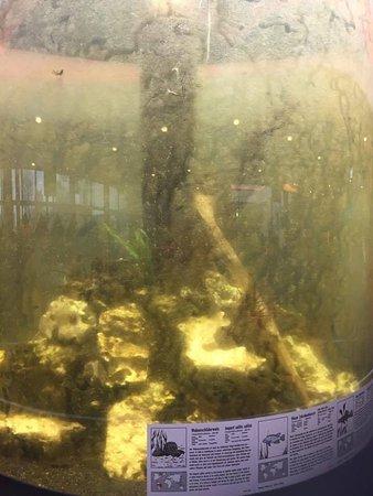 Wangels, Germany: akvarie foran indgangen til badelandet. Stakkels fisk :-(