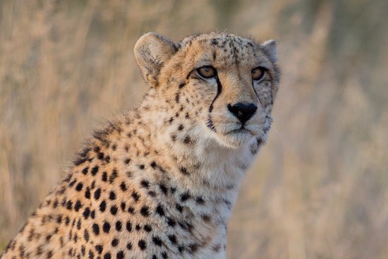Thandeka Lodge and Spa: Wildlife
