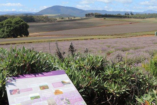 Tasmanien, Australien: Site is well set up with interpretative signage.
