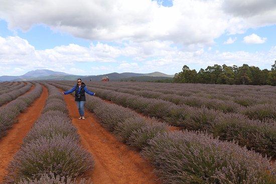 Tasmanien, Australien: Great photo opportunities