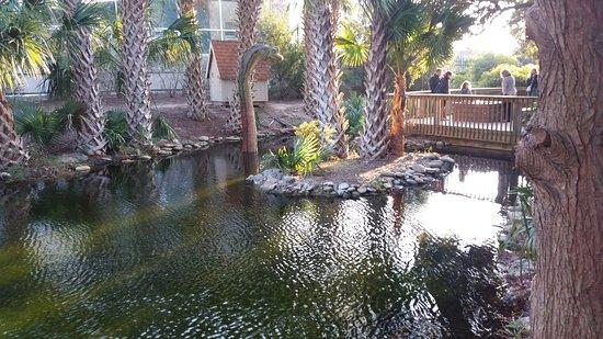 North Carolina Aquarium at Fort Fisher: Dinosaur display area