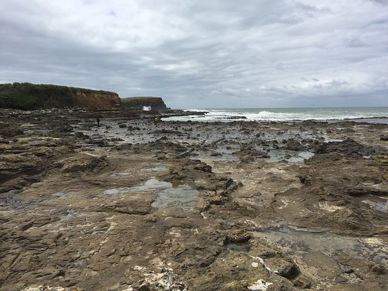 Southland Region, New Zealand: Resti foresta fossile