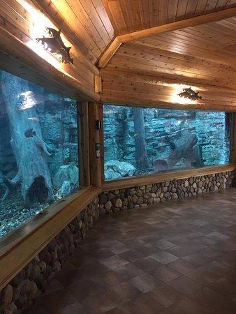 Aquarium inside - Picture of Cabela's, Triadelphia - TripAdvisor on