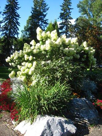 Prince George, Kanada: Perennial garden.