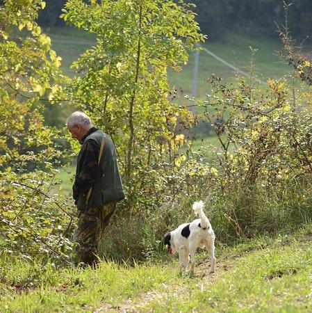 Truffle in Tuscany : Hunting truffles near San Miniato