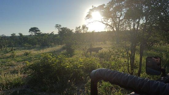 Elephant Plains Game Lodge: 20170124_060540_large.jpg