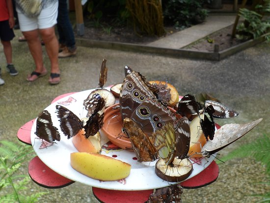 La Gueriniere, Frankrig: pause repas des papillons